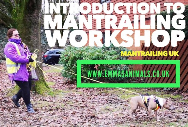 Introduction To Mantrailing Workshop East Horsley
