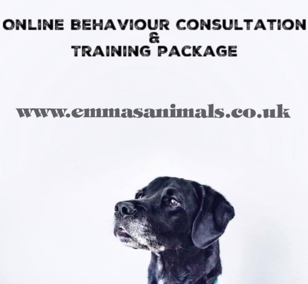 Online Behaviour consultation and Support